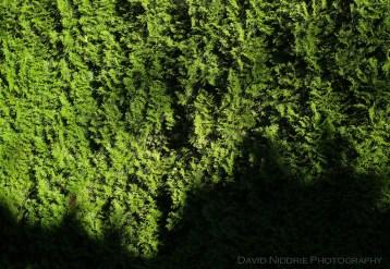davidniddrie_woodlandgarden_aug-9722