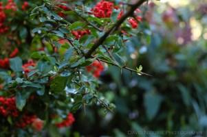 davidniddrie_woodlandgarden_autumn-9700