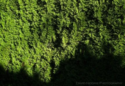 davidniddrie_woodlandgarden_autumn-9722