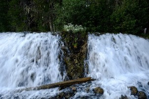 A waterfall pours from the forest at Clearwater Lake campground, BC.