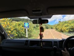 The road to Doi Mae U-Kho to see wild sunflowers