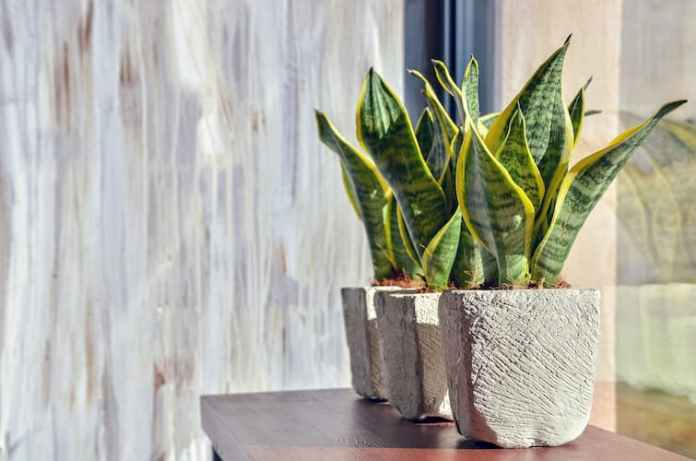 Absorb Air Pollution In Your Home