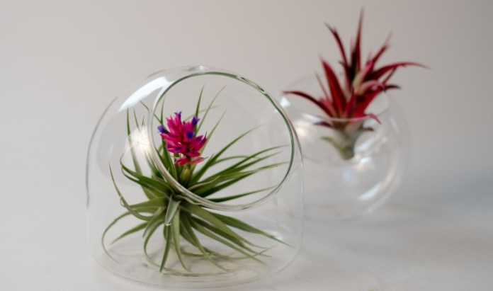 Ornamental Plants For Coffee Table