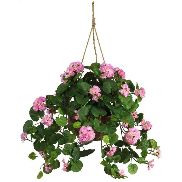 Geraniums - Hanging Ornamental Plants