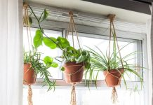 Hanging Ornamental Plants To Beautify Your Home