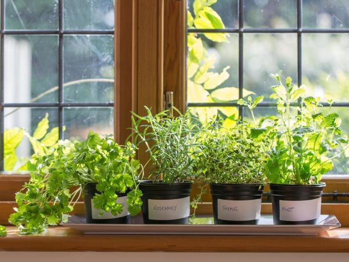 Mini Garden on the Window