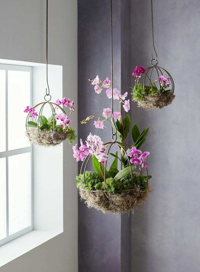 Orchid Flower Hanging Ornamental Plants