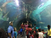 Adventure Aquarium Camden NJ