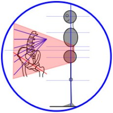 Structural Alignment & Lumbar-Pelvis Illustration for Precise Yoga Therapy & Bodywork: structural bodywork