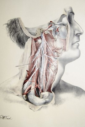 illustration of nerves and muscles - Doctor Sarno Back Pain Relief w/ Joe Polish
