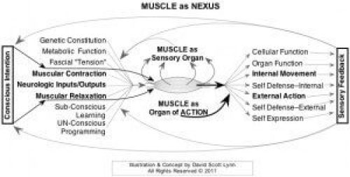 Muscle as Nexus between inner & outer reality. Mindful medical massage works with intersection of mind and body