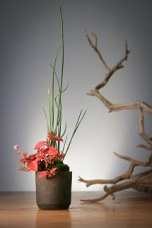 Una maceta rústica para la que me pidió que le plantase algo que le quedara bien. 50x50x60mm. Scirpus holoschoenus y Polygonum capitatum (Persicaria capitata).