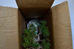 Caja tumbada con el árbol perfectamente sujeto. Nótese la posición de la botella dentro de la caja.
