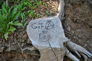 Thanks, tree stump. I think I will.