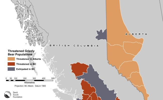 Map Threatened Grizzly Bear Populations David Suzuki Foundation