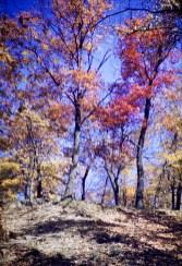Autumn - Autumn Shadows