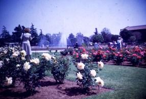 Exposition Park - Rose Garden