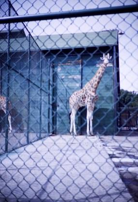 """San Francisco - """"Frisco"""" - Fleischhacker Zoo"""