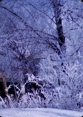 Winter - Frosty