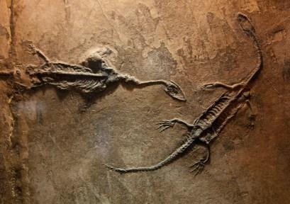 reptile dinosaur fossils