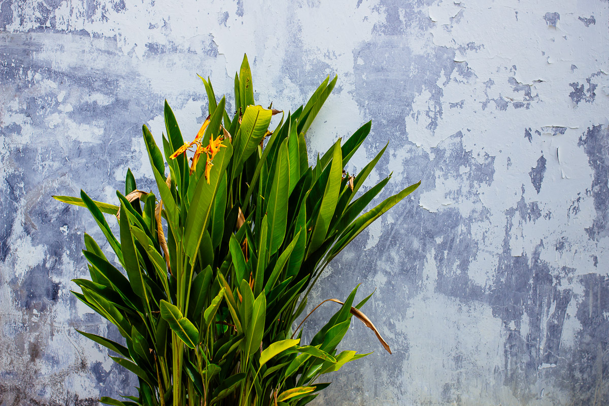green plant with orange blossoms in front of withered grey-white wall
