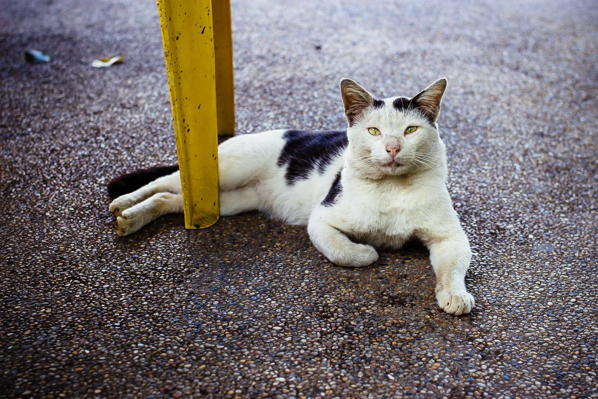 Leicht schmutzige Katze mit schwarz-weißem Fell liegt auf dem Asphalt zwischen den Beinen eines gelben Plastikstuhls
