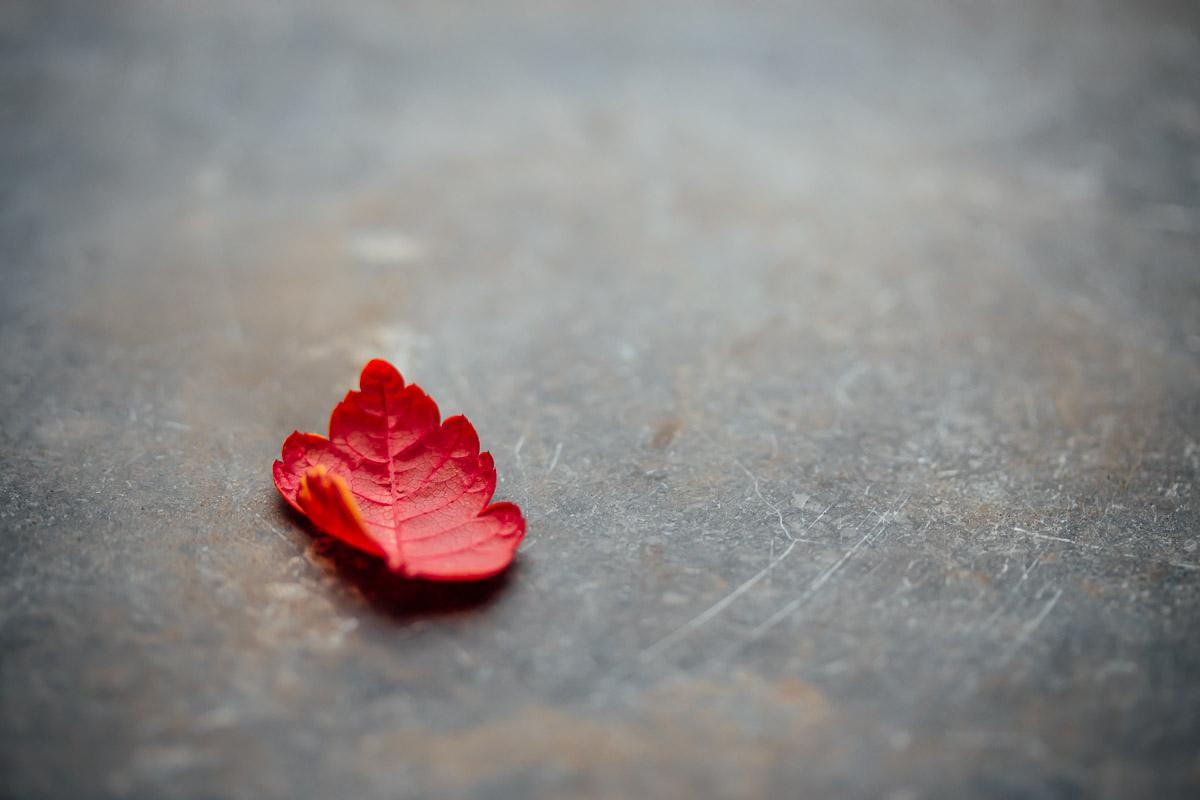 little red leaf on grey stone