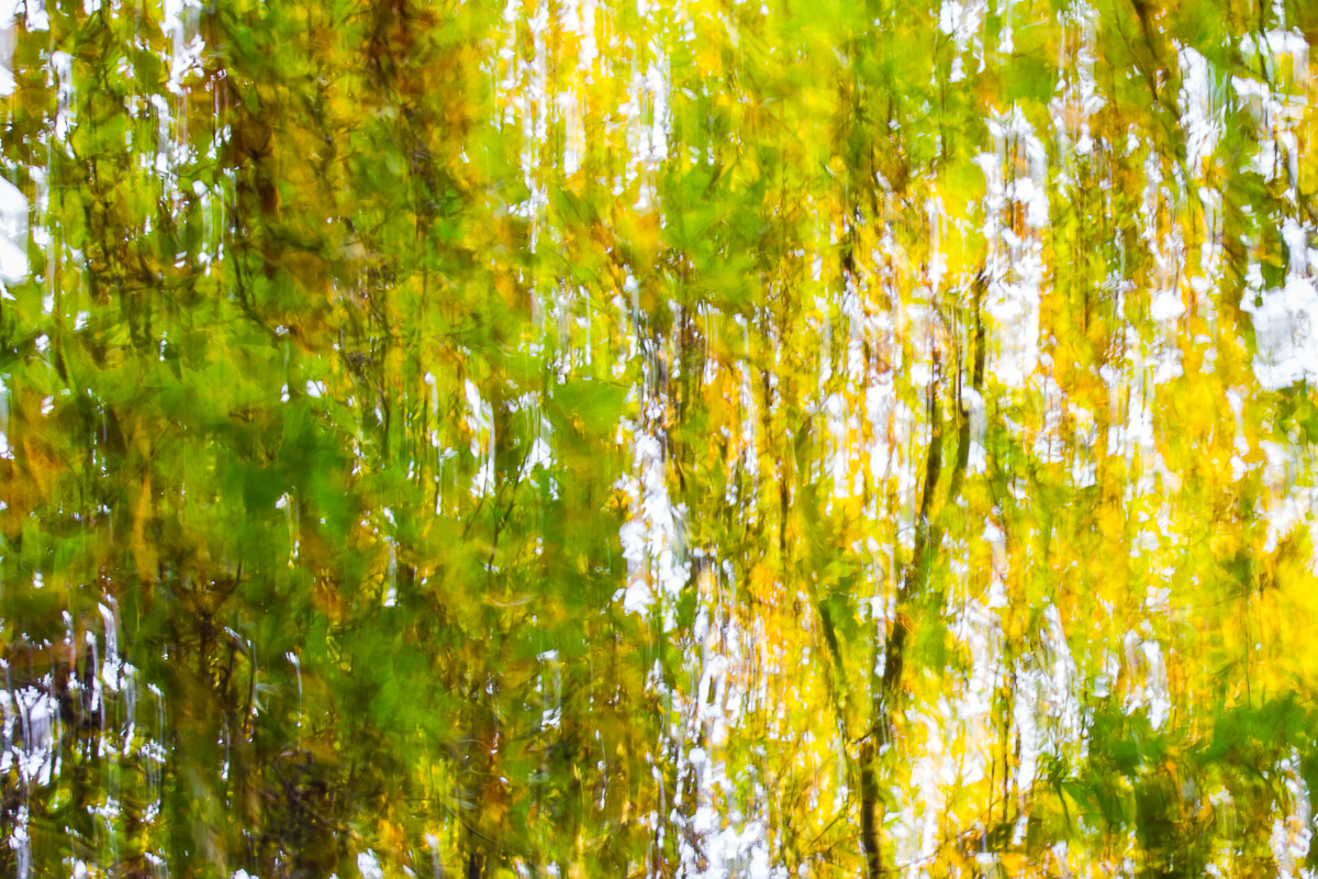 Abstract image a tree moved by the wind in shades of green, brown and yellow