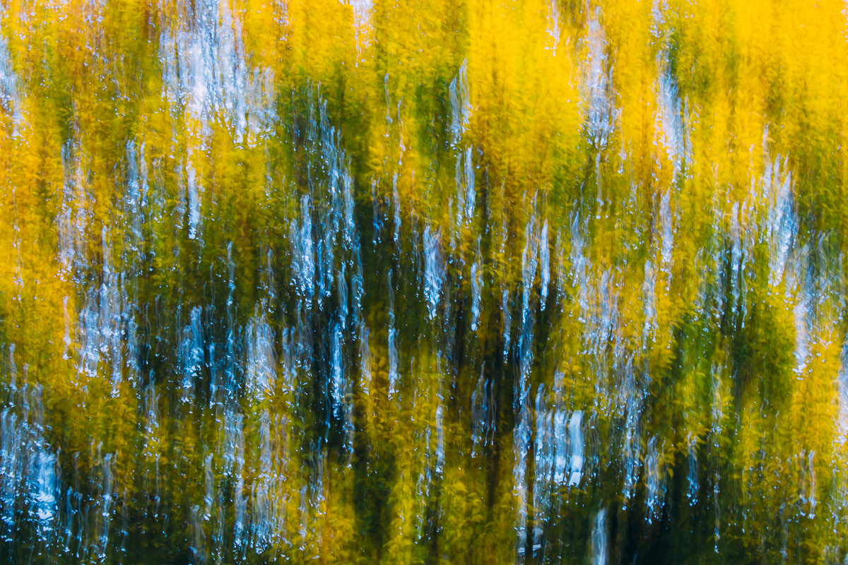 Abstract image of moving branches in shades of green, yellow and blue