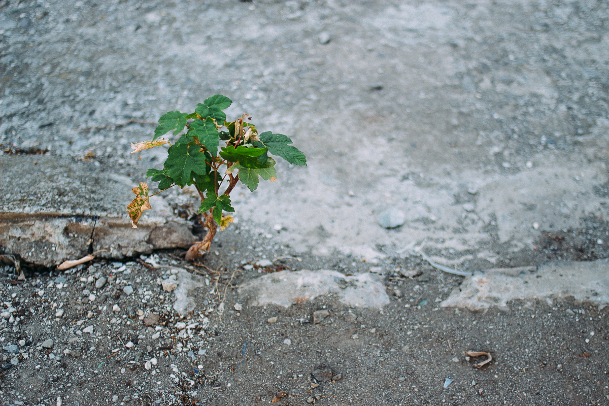 Little tree growing out of concrete