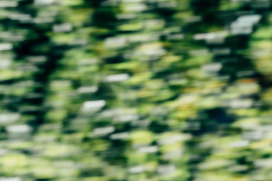 Abstraktes Bild einer Korkenzieherweide in verschiedenen Grüntönen