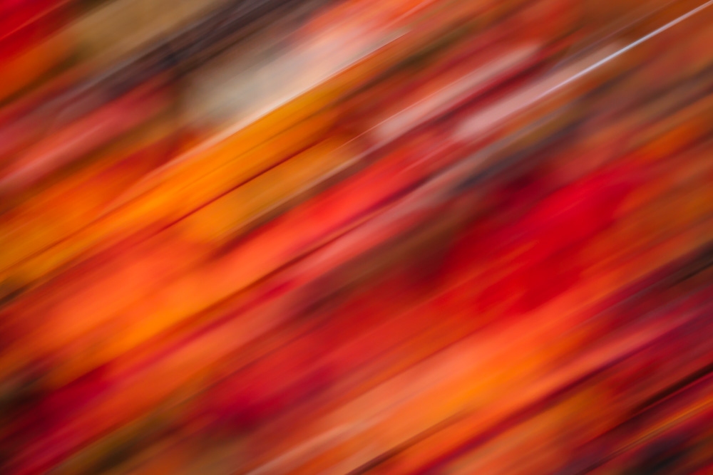 Abstract image of autumn leaves in shades of red, pink, orange and black