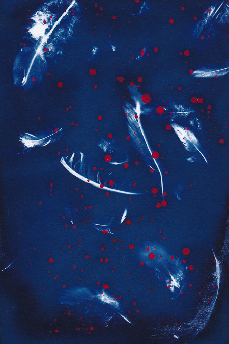 Cyanotype of little bird feathers with splashes of red acrylic paint