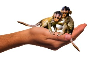 Two monkeys in a human hand