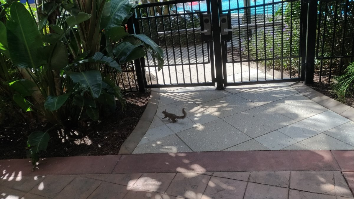 Orlando Squirrel
