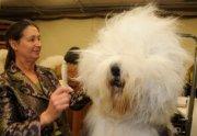 eco dog products dawg good