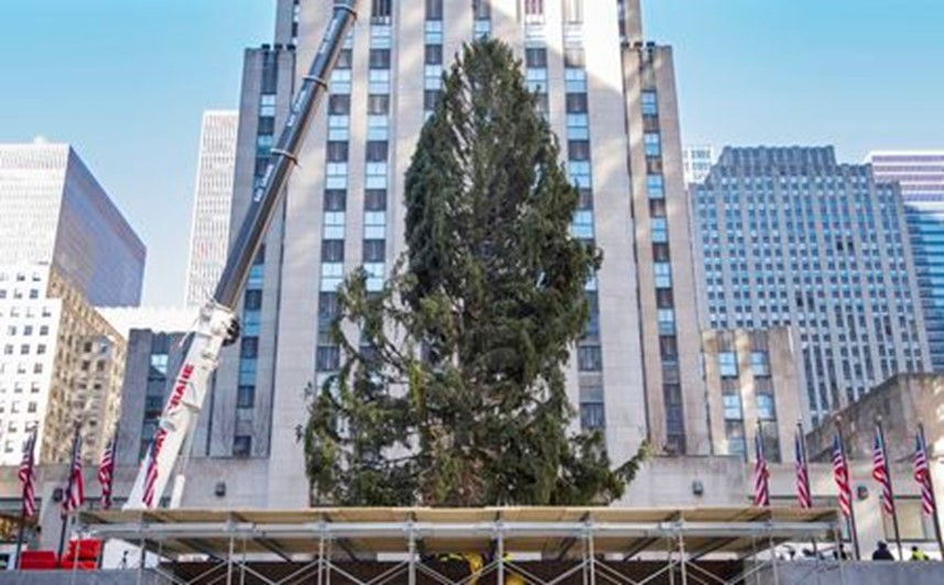 NYC CHRISTMAS TREE ARRIVES (VIDEO)