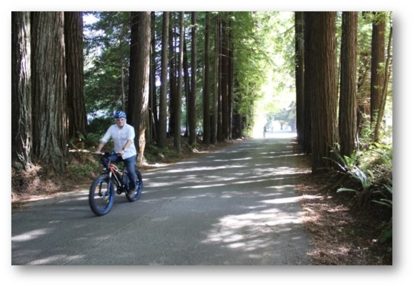 NOR CAL ADVENTURES ELECTRIC BIKE RIDE THROUGH THE REDWOODS