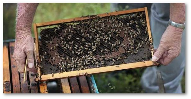 NEW INSTANT RESULT COVID TEST: BEES