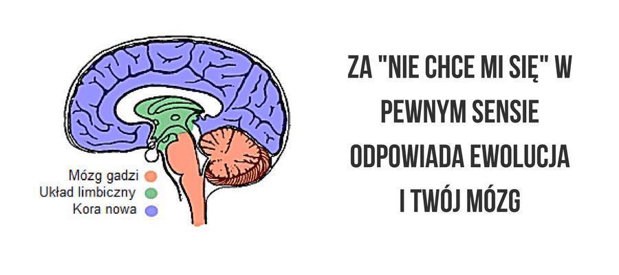 mózg gadzi mózg ssaczy kora mózgowa