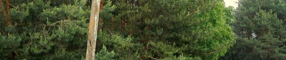 Czarci Dół - Mazowiecki Park Krajobrazowy