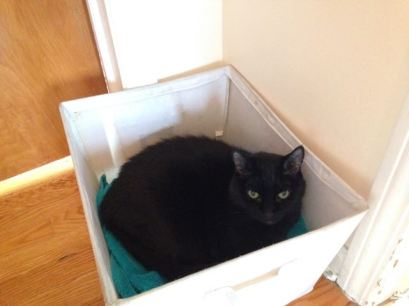 The cat trap is working.