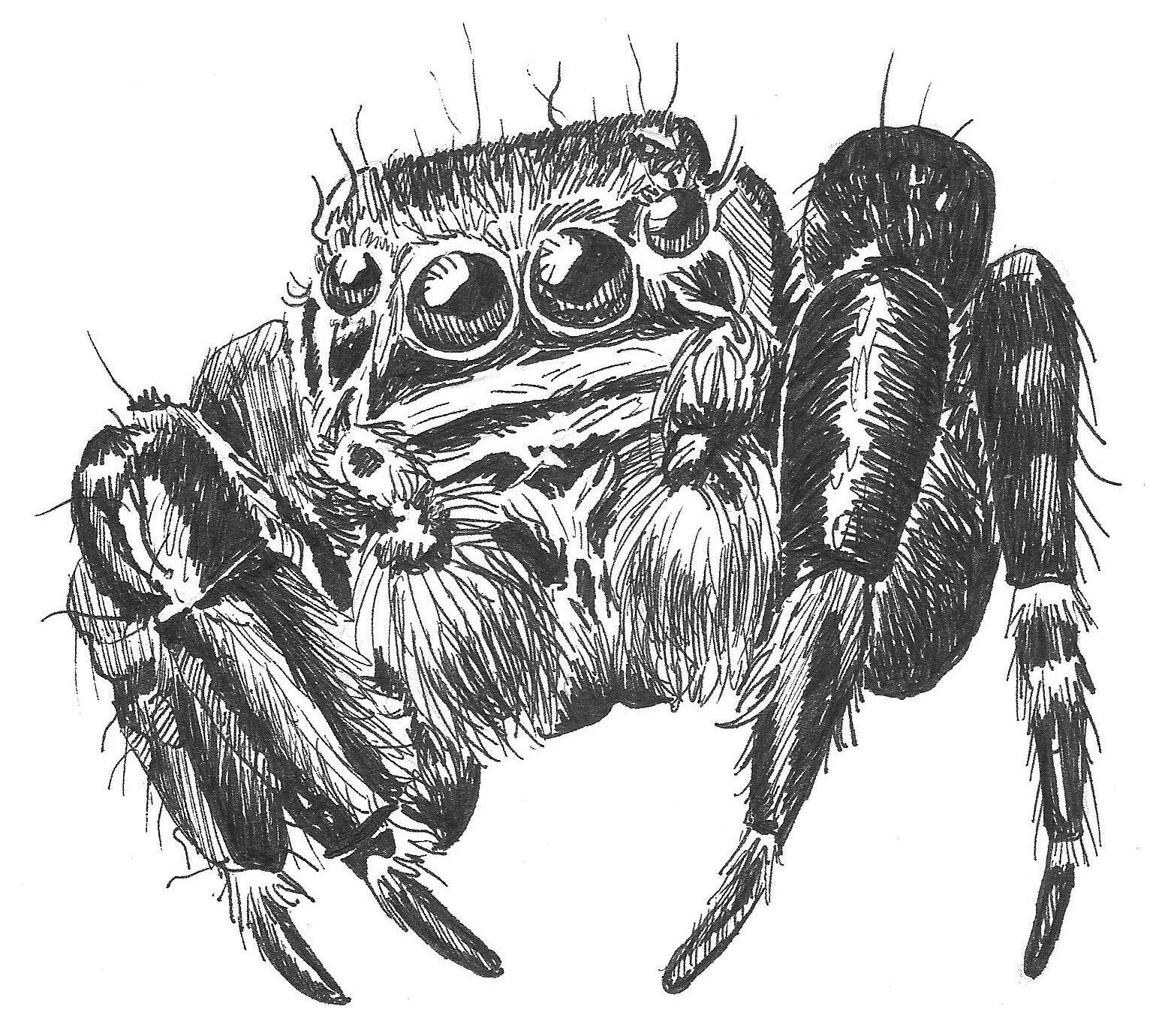 Tarantula Worksheet