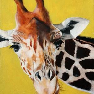 11x14 Oil Portraits