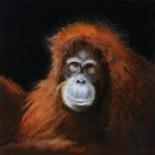 Indah (Orangutan)