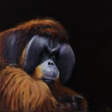 Rudi Valentino (Bornean/Sumatran Orangutan )