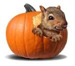 peter peter pumpkin eater inside pumpkin
