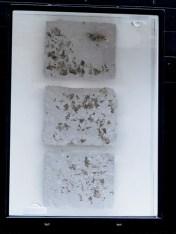 Lichen Landscape: Paper Pulp with Lichen inclusion