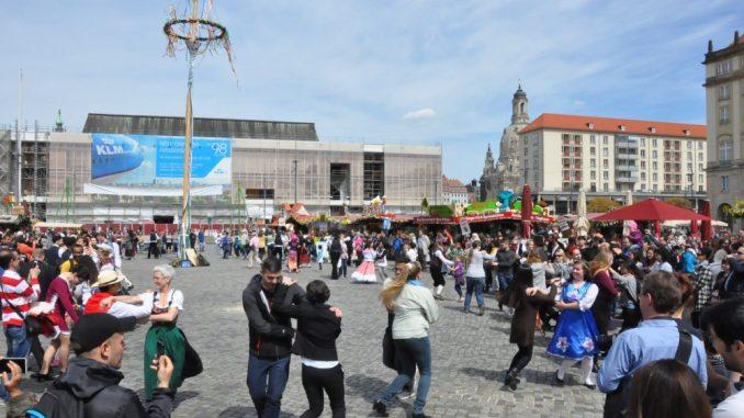 Der Maibaum wird traditionell zur Eröffnung des Frühjahrsmarktes auf dem Dresdner Altmarkt gesetzt. Foto: Una Giesecke