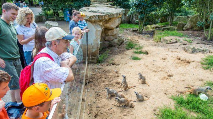 Die kleinen Erdmännchen gehören zu den Publikumslieblingen im Zoo. Foto: Eric Münch
